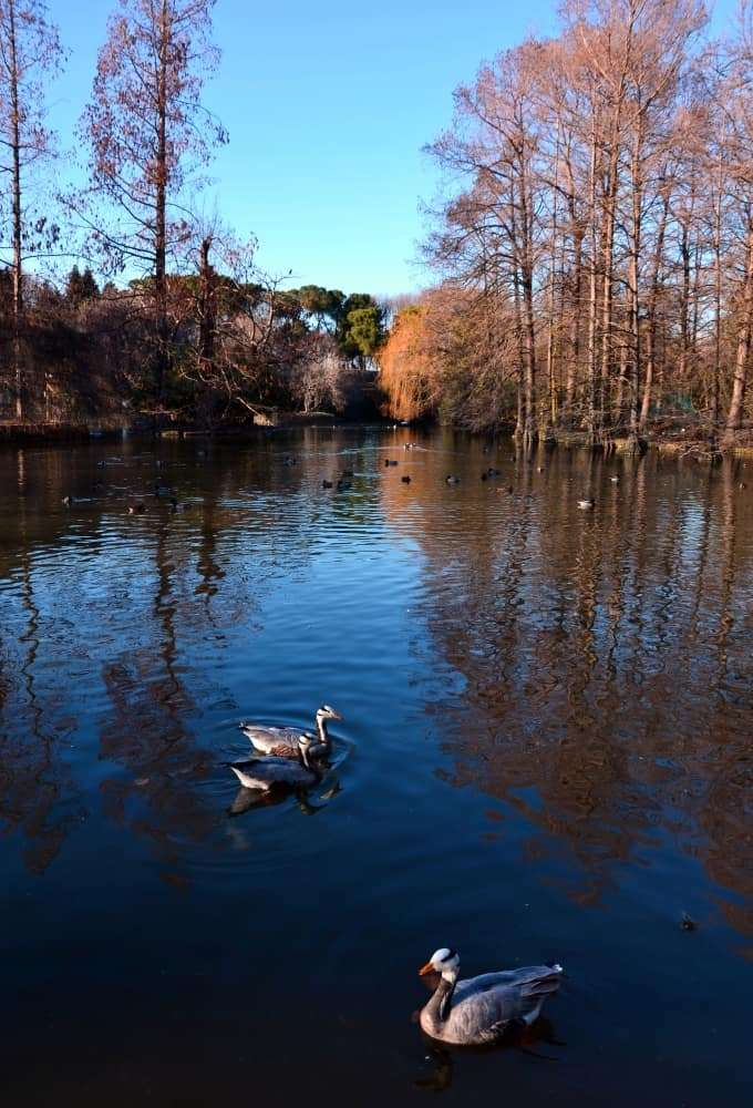 lago con anatre al parco