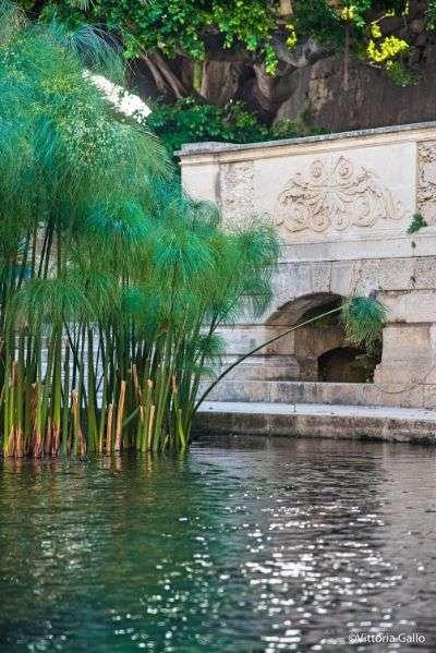 Fonte Aretusa, acqua dolce, cosa vedere a Siracusa