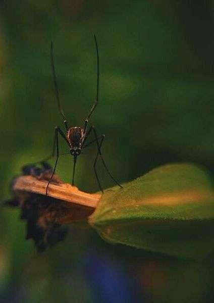 migliore antizanzare tropicale foto di zanzara