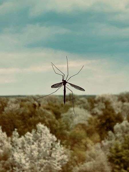 zanzara sulla finestra