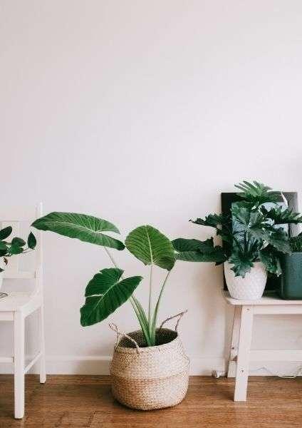 Vasi in primo pianto con piante, uno a terra ed ai lati poggiati su tavoli. Lasciare i tuoi beni, comincia dalle piccole cose